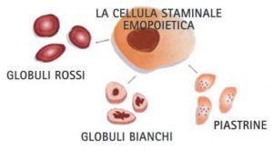 Cellule Staminali Emopoietiche